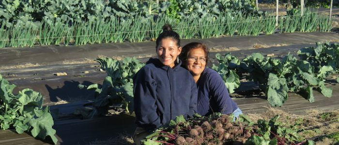 two women working in a vegetable garden