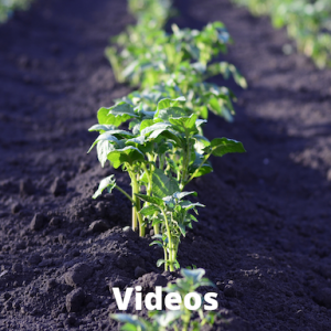 vegetable plants growing in ground with words video on it